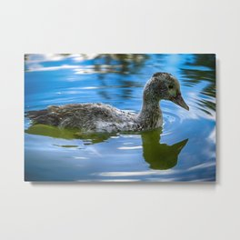 Reflection Duck - Colorful Metal Print