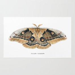 Oculea Silkmoth (Antheraea oculea) Rug