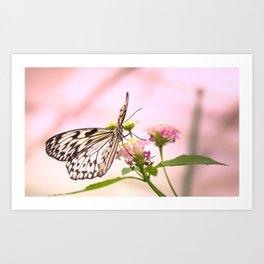 Butterfly on Pink Flowers Art Print