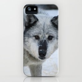 Lone wolf roams the Canadian Rockies iPhone Case