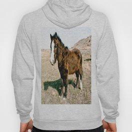 Mini Horse Hoody