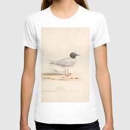 Little Gull, larus minutus5 T-shirt