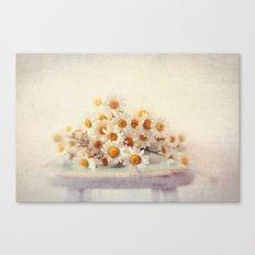 daisies on a stool Canvas Print