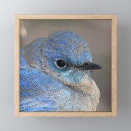 Watercolor Mountain Bluebird Framed Mini Art Print