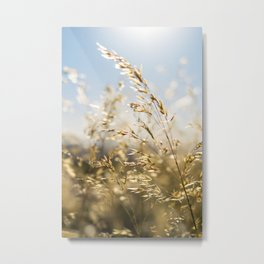 Wheat Fields Metal Print