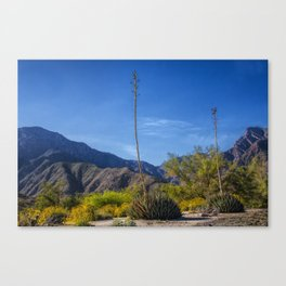 Desert Flowers in the Anza-Borrego Desert State Park, Southern California Canvas Print