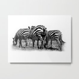 Three Zebras Metal Print