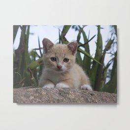 kitten on a rock Metal Print