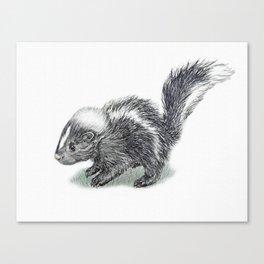 Baby Skunk Canvas Print