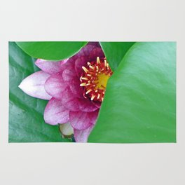 Pink Water Lily Rug
