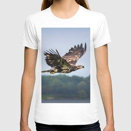 Immature Bald Eagle T-shirt