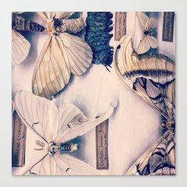 A Mé·lange of Butterflies Canvas Print