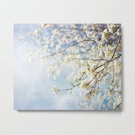 White Flowers Against the Sky Metal Print