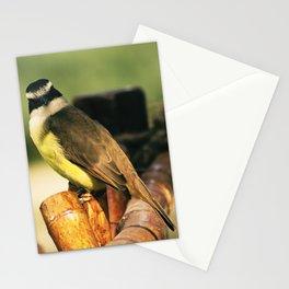Curious Great Kiskadee Stationery Cards