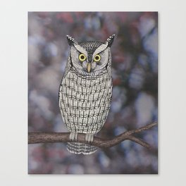 eastern screech owl on a branch Canvas Print