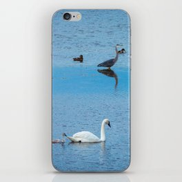 A Family of Swans Swim by a Great Blue Heron at Henrys Lake, Idaho iPhone Skin