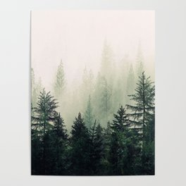Foggy Pine Trees Poster