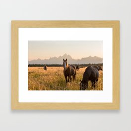 Horses Grazing Below the Tetons Framed Art Print