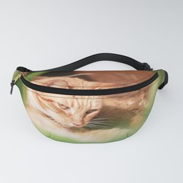 Cats Fanny Pack