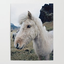 White Horse in Iceland Poster