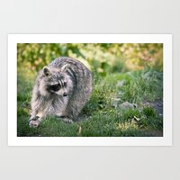 racoon Art Prints featuring Racoon by Ruslana S