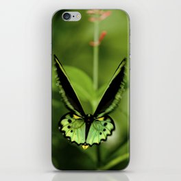 Birdwing Butterfly iPhone Skin
