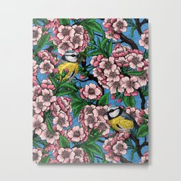 Blue tit birds in the blooming cherry tree on blue Metal Print