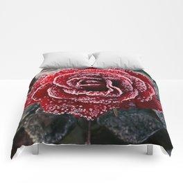 Frozen Rose Comforters