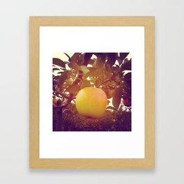 Honey Crisp Framed Art Print