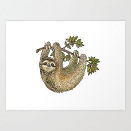 Sloth on a Branch Art Print