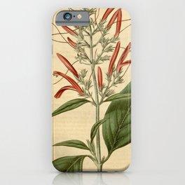 Flower 2060 justicia secunda Side flowering Justicia10 iPhone Case