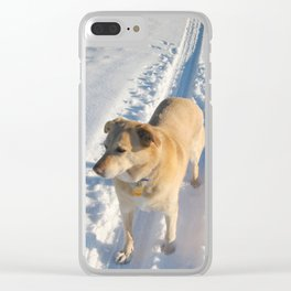 Dogs   Dog   Waiting Dog   Golden Lab Clear iPhone Case