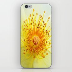 Rose Heart iPhone & iPod Skin
