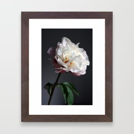 Soft pink peony Framed Art Print