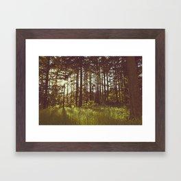 Summer Forest Sunlight - Nature Photography Framed Art Print