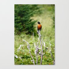 red robin Canvas Print