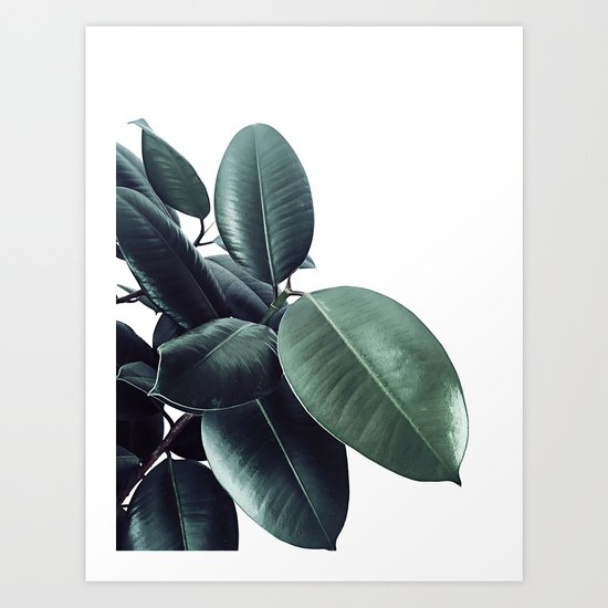 Ficus Elastica #18 #White #foliage #decor #art #society6 by anitabellajantz