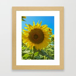 Sunflower Fields Framed Art Print
