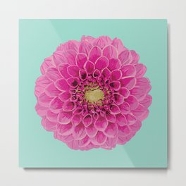 Dahlia (Part of a Triptych) Metal Print