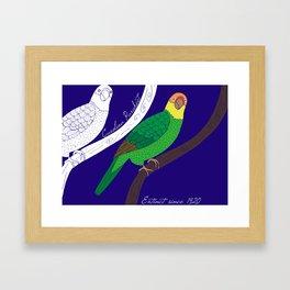 Carolina Parakeet Framed Art Print
