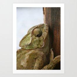 Close Up Of A Wild Green Chameleon Art Print