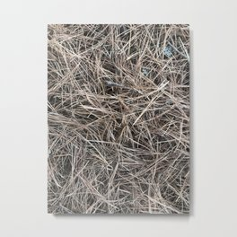 Adirondack Pine needles Metal Print