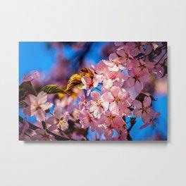 Garland Of Fresh Pink Sakura Flowers Metal Print