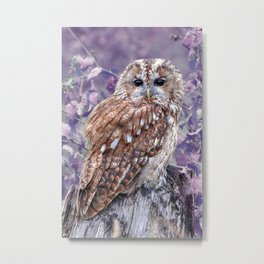 Cute Tawny owl with purple background Metal Print