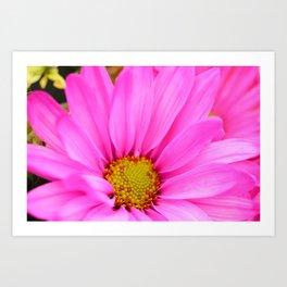 Pink Daisy Petals macro Art Print