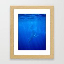 Underwater Humpbacks 9 Framed Art Print