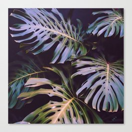 Night tropics Canvas Print