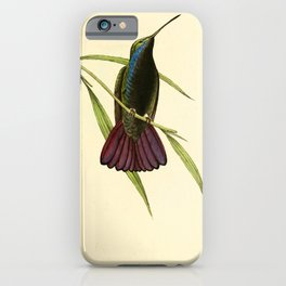 Mango Hummingbird by William Swainson, 1841 (benefitting the Nature Conservancy) iPhone Case