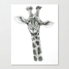 Young Giraffe  G2012-053 Canvas Print