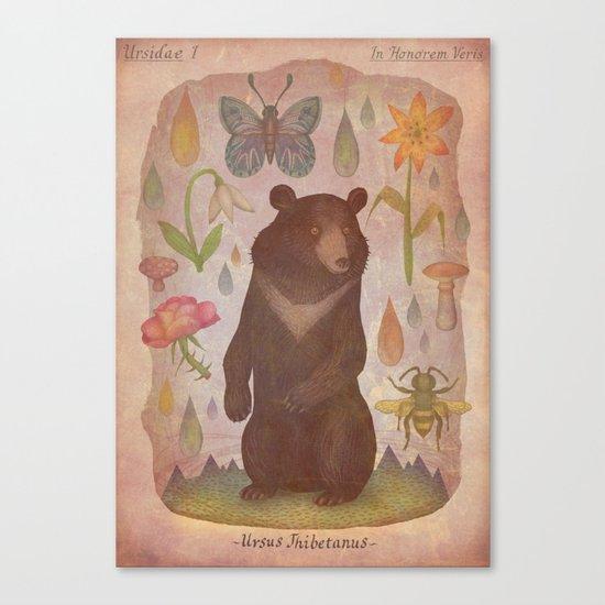 Asian Black Bear Canvas Print